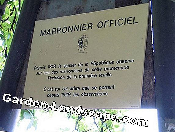 Marronnier - Instructions & conseils