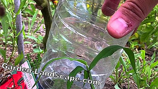 Transplanter des plantes en pot - Instructions pour rempoter