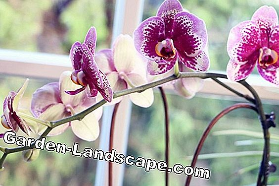 Repotting Phalaenopsis - Informations sur les supports, Time & Co
